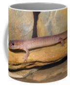 Spring Salamander Coffee Mug
