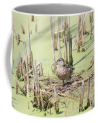 Teal Duck Coffee Mug