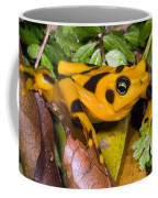 Harlequin Toad Coffee Mug
