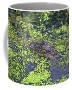 31- Alligator Hatchling Coffee Mug