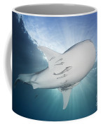 Whale Shark Feeding Under Fishing Coffee Mug