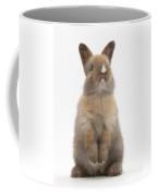 Baby Rabbit Coffee Mug