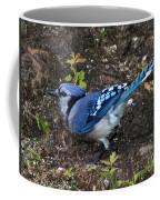 Blue-jay Coffee Mug