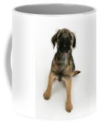 Border Terrier Puppy Coffee Mug