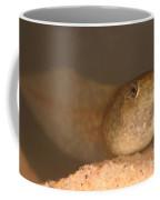 Bullfrog Tadpole Coffee Mug by Ted Kinsman