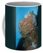 Colourful Reef Scene, Ari And Male Coffee Mug