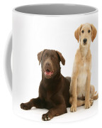 Labradoodle And Labrador Retriever Coffee Mug by Jane Burton