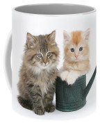 Maine Coon Kittens Coffee Mug