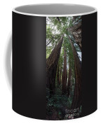 Redwoods Sequoia Sempervirens Coffee Mug