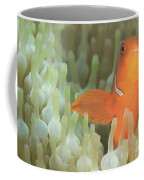 Spinecheek Anemonefish In Anemone Coffee Mug