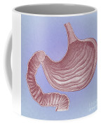 Stomach Coffee Mug