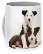 Border Collie Puppies Coffee Mug