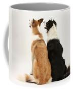 Border Collies Coffee Mug