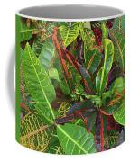 5- Croton Coffee Mug
