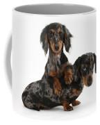 Dachshund Pups Coffee Mug