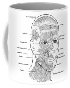 Illustration Of Facial Muscles Coffee Mug