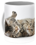 Kitten Companions Coffee Mug
