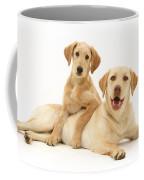 Labradoodle And Labrador Retriever Coffee Mug by Jane Burton