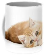 Playful Kitten Coffee Mug