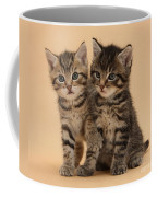 Tabby Kittens Coffee Mug