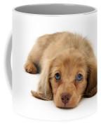 Dachshund Pup Coffee Mug