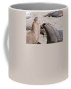 Elephant Seal Colony On Big Sur  Coffee Mug