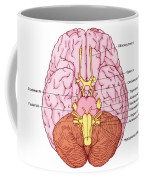 Illustration Of Cranial Nerves Coffee Mug