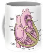 Illustration Of Heart Anatomy Coffee Mug