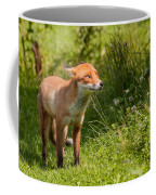 A British Red Fox Coffee Mug
