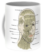 Illustration Of Facial Muscles Coffee Mug