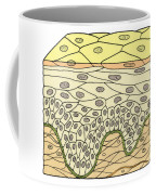 Illustration Of Stratified Squamous Coffee Mug by Science Source