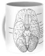 Illustration Of Cranial Nerves Coffee Mug
