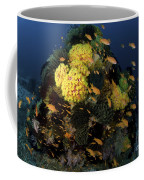 Reef Scene With Coral And Fish Coffee Mug