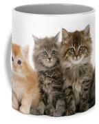 Maine Coon Kittens Coffee Mug