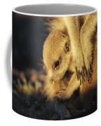 A Baby Meerkat Snuggles Coffee Mug