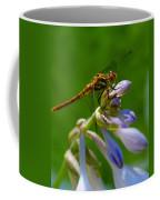 A Beauty On A Beauty Coffee Mug