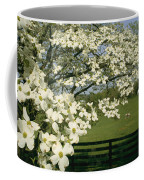 A Blossoming Dogwood Tree In Virginia Coffee Mug