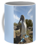 A Blue-footed Booby Of The Galapagos Coffee Mug