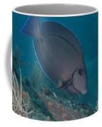 A Blue Tang Surgeonfish, Key Largo Coffee Mug