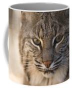 A Bobcat At The Rolling Hills Zoo Coffee Mug by Joel Sartore