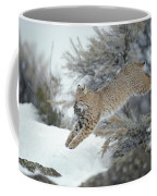 A Bobcat Leaps With A Horned Lark Coffee Mug by Michael S. Quinton