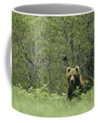 A Brown Bear In Tall Grasses Coffee Mug