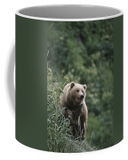 A Brown Bear Sow With Her Twin Cubs Coffee Mug by Tom Murphy