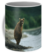 A Brown Bear Standing At Waters Edge Coffee Mug
