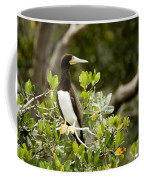 A Brown Booby Sula Leucogaster Coffee Mug by Tim Laman
