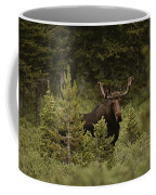 A Bull Moose Stops For A Photograph Coffee Mug by Raymond Gehman