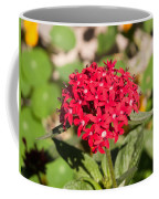 A Bunch Of Small Red Flowers Coffee Mug