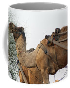 A Camel Foraging For Food In A Desert Environment Coffee Mug