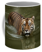 A Captive Sumatran Tiger Panthera Coffee Mug