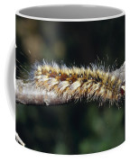 A Caterpillar In Defensive Posture Coffee Mug by Jason Edwards